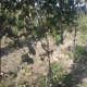 winobranie-cassiopeia-2013-22